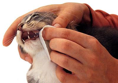 Сколько стоит стерилизация кошки шахты
